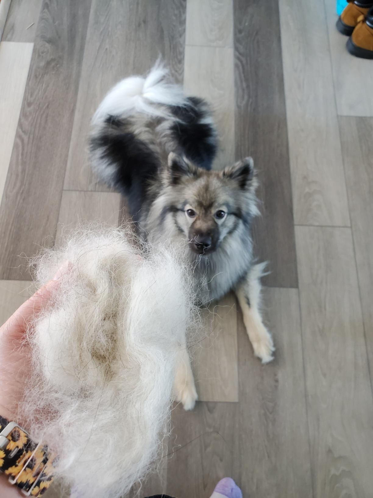 Reviewer holding a huge pile of dog hair with their dog in the background