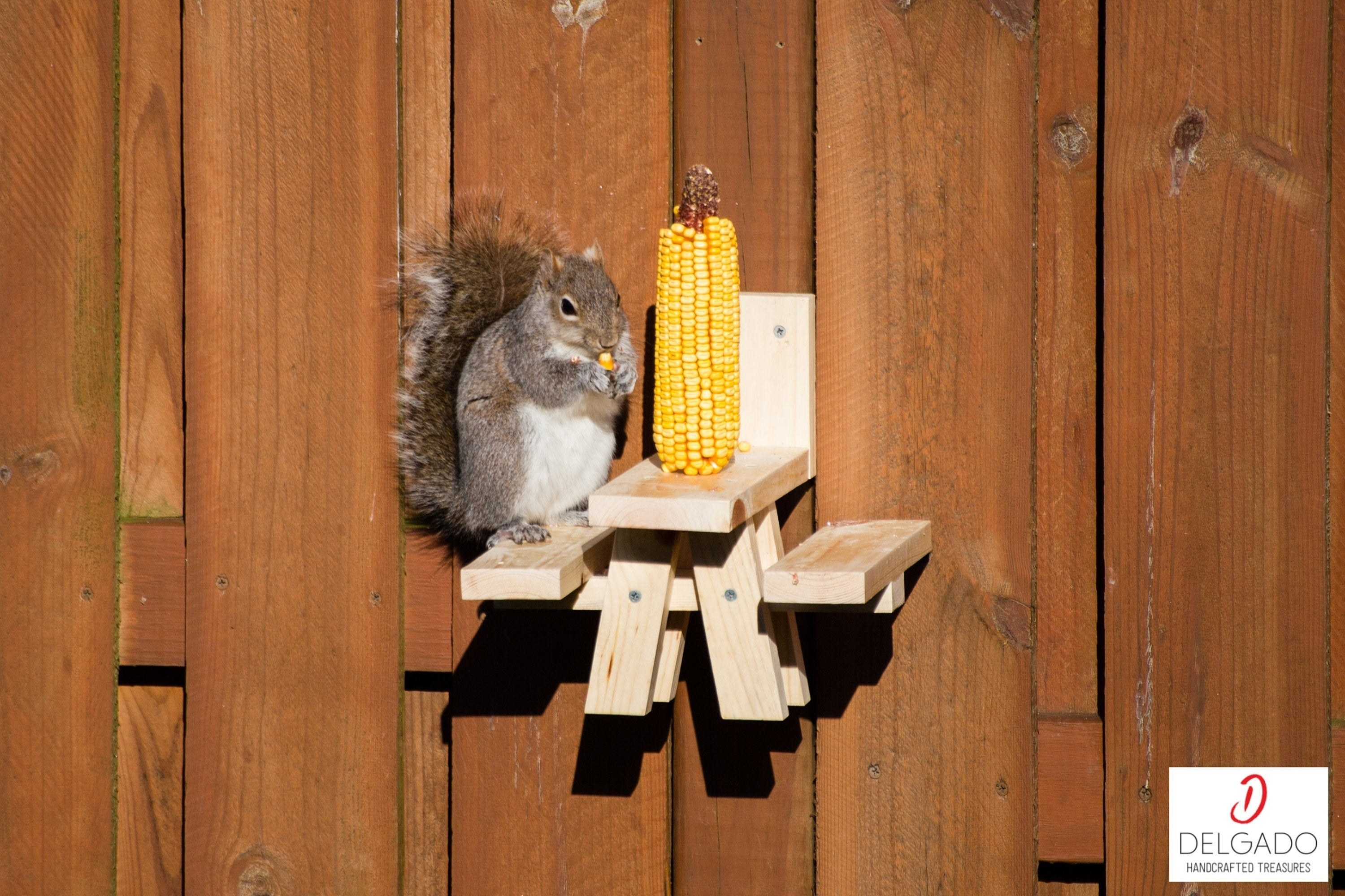 a squirrel nibbling on corn on the cob while standing on a small picnic table that is screwed into a fence