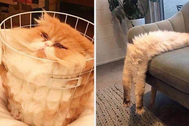 18 Katzen, die allen Gesetzen der Physik trotzen