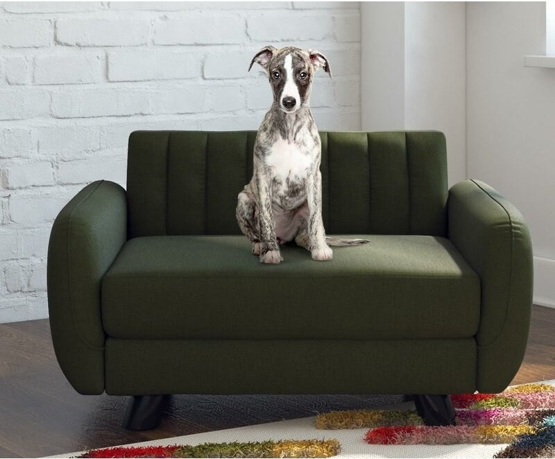 Small dog on the dark green couch