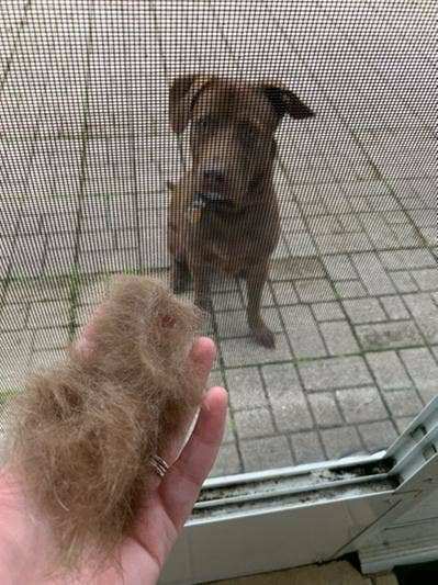 Reviewer holding large chunk of fur they brushed off their dog