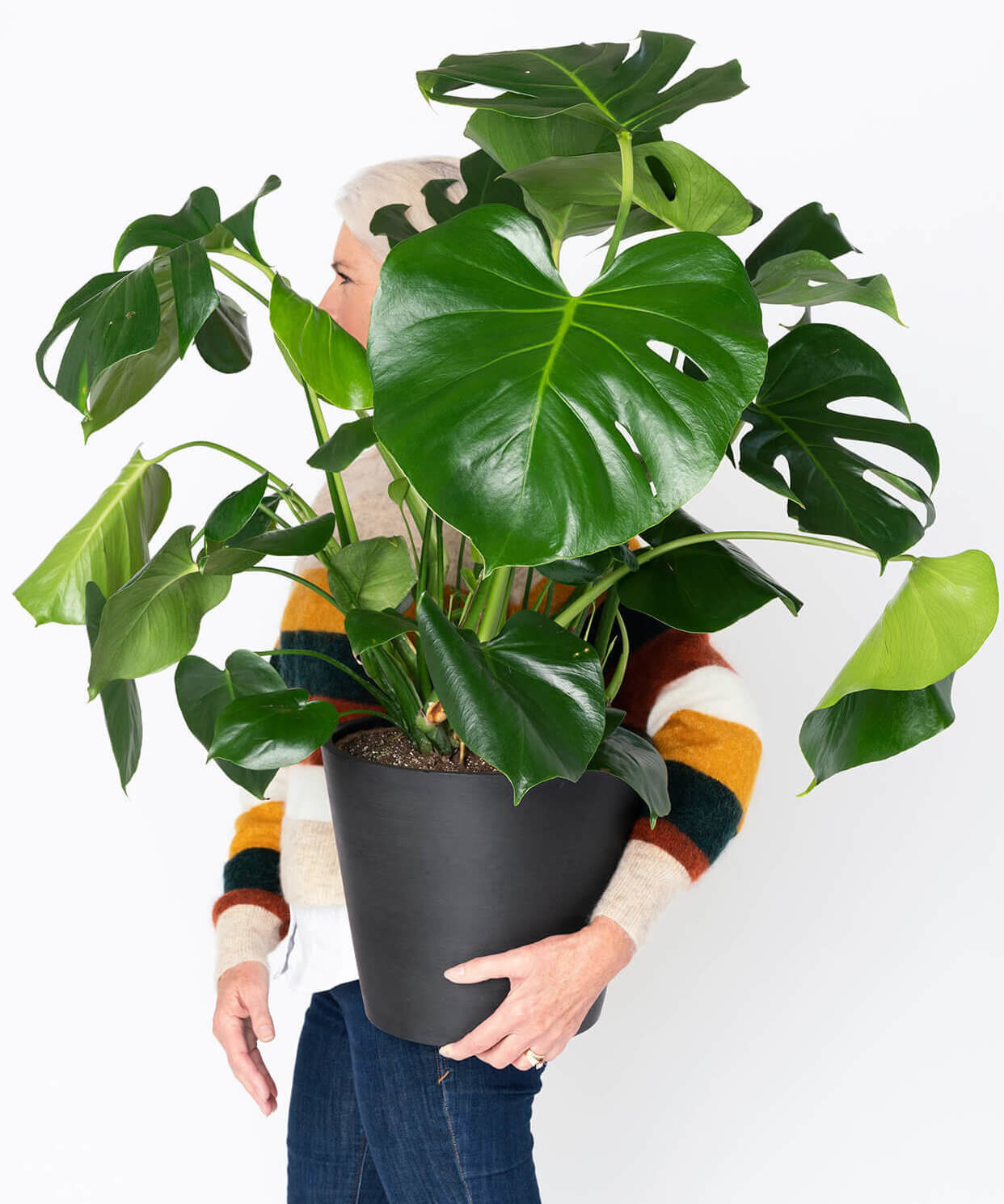 The Monstera in a black vase