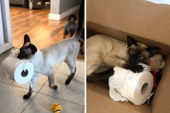 17 Cats Who Took A Stand Against Toilet Paper Hoarding
