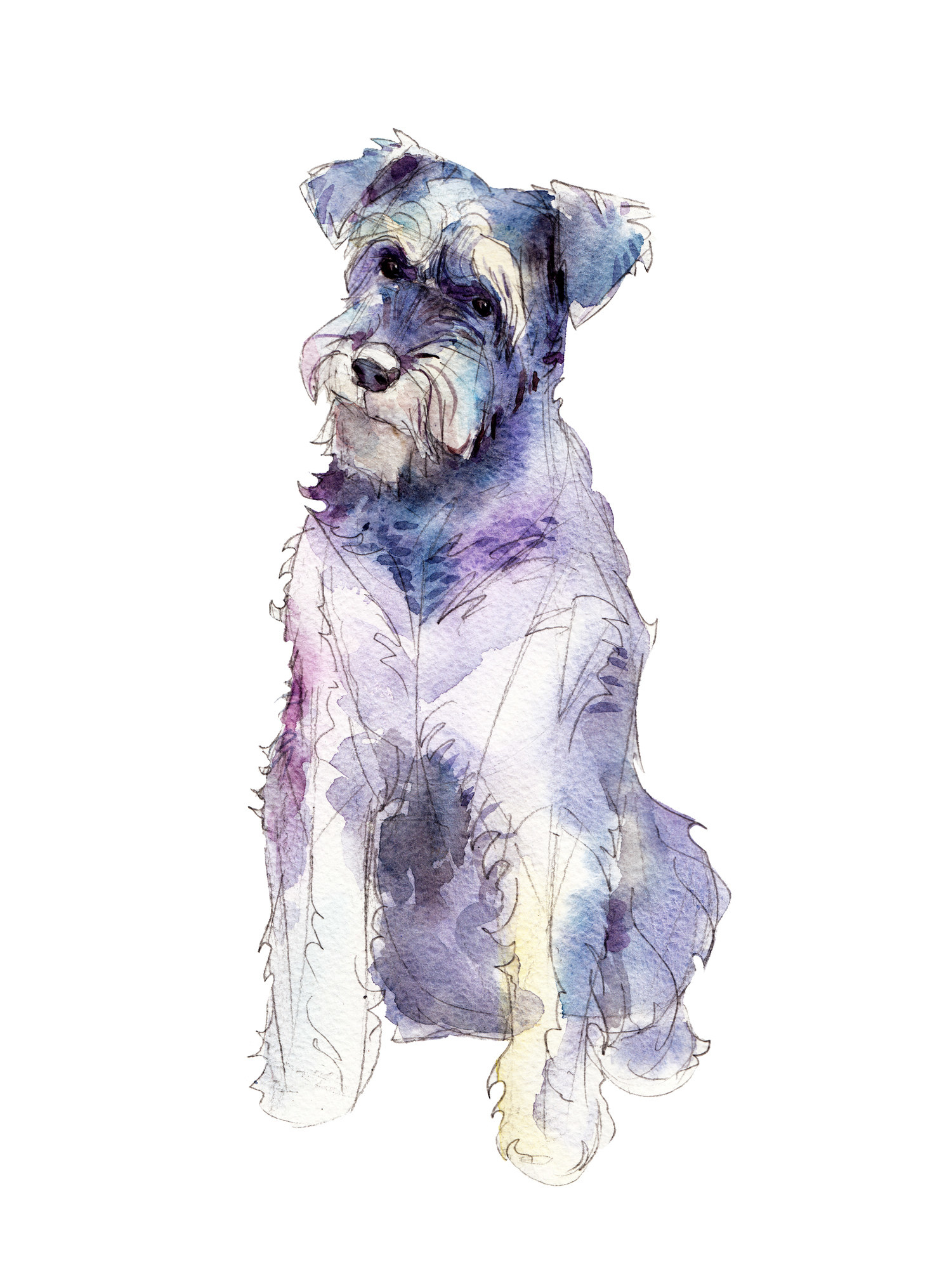 Water color painting of a Schnauzer