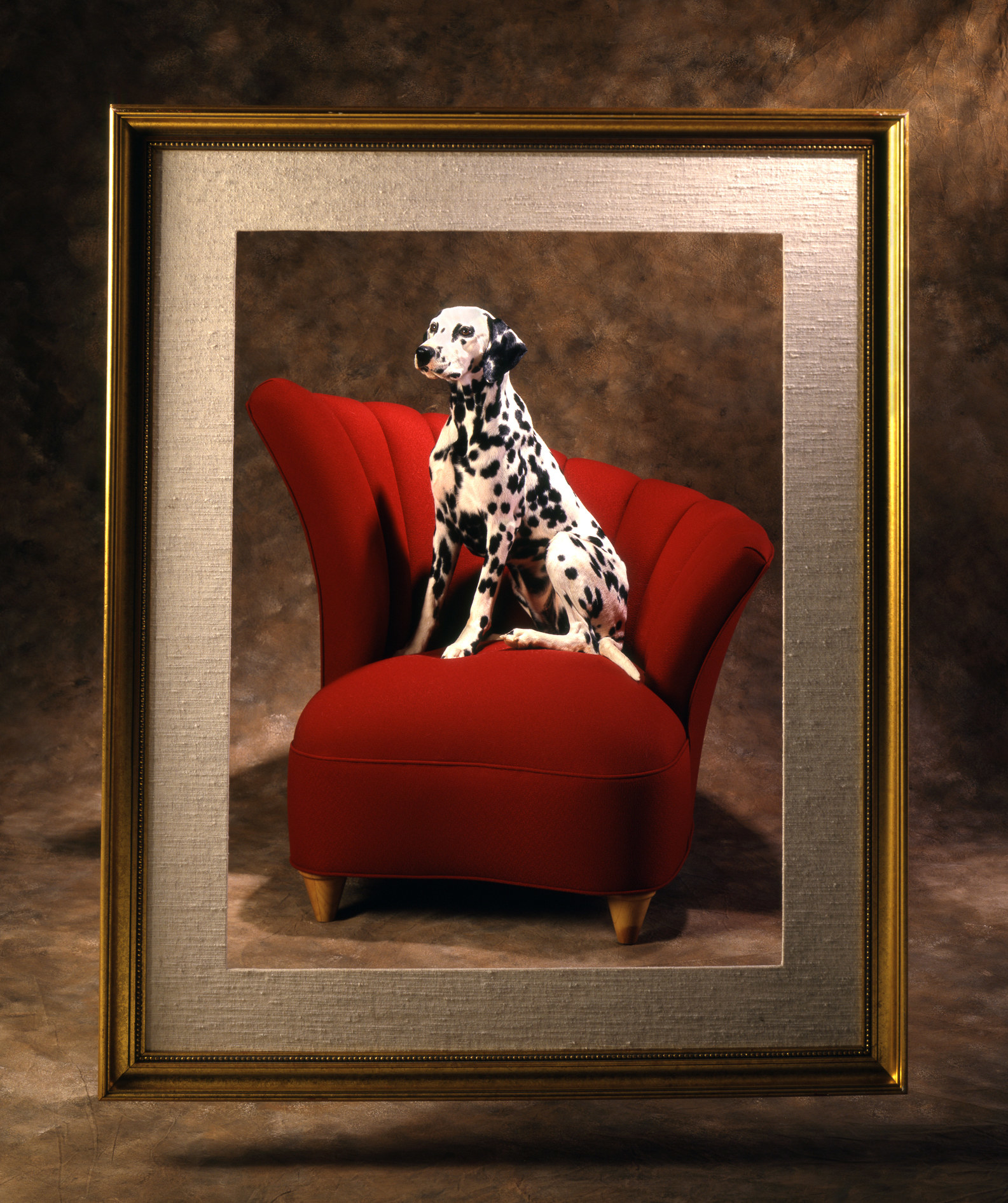 A Dalmatian on a red chair in a photo