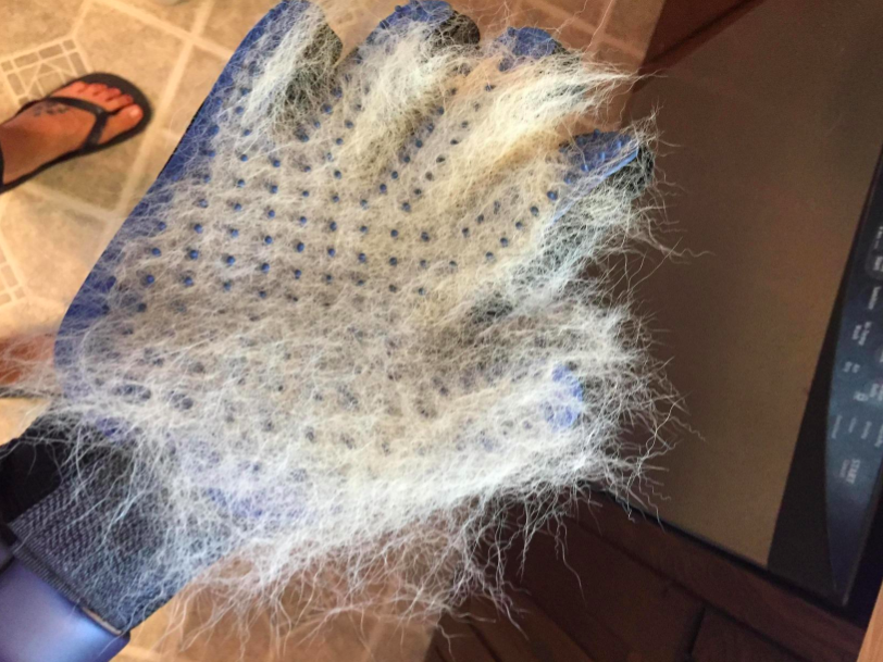 a reviewer wearing the deshedding glove which is covered in white dog fur