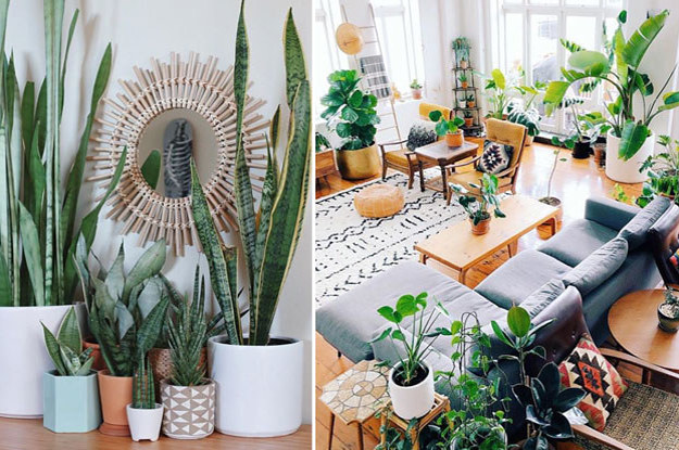 A Guide To All The Trendy Houseplants You Re Seeing All Over Instagram