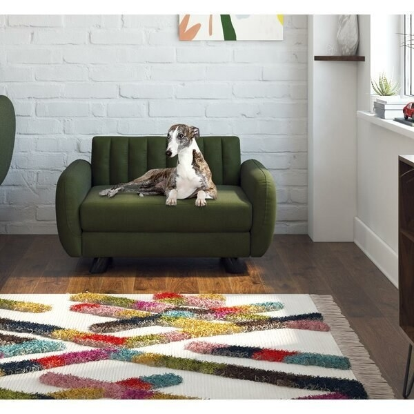 Dog sitting on mid-century modern sofa