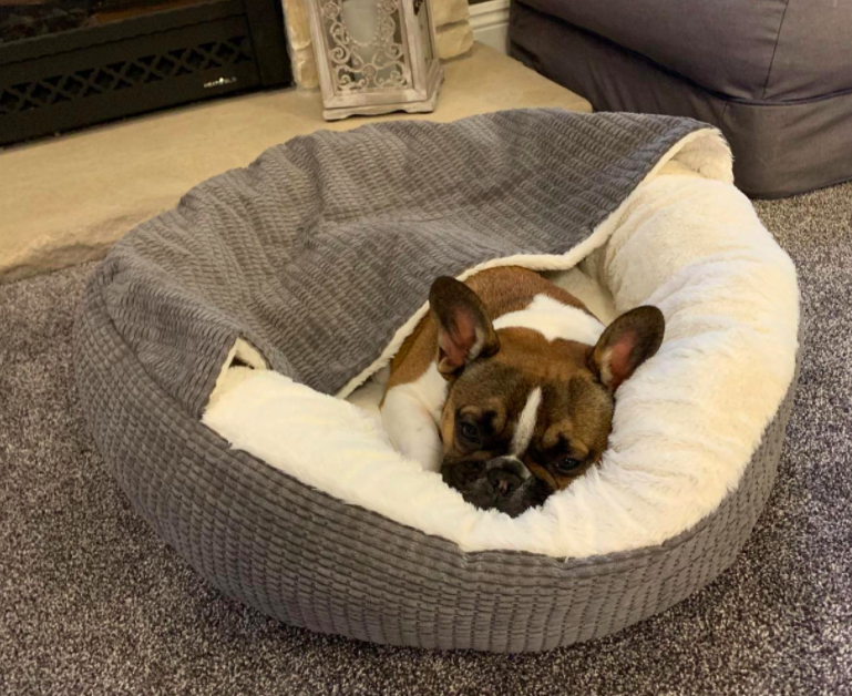 puppy in the dog bed