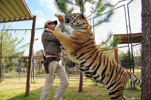 """14 Fakten über Tiger in Gefangenschaft, über die du nach """"Tiger King"""" Bescheid wissen solltest"""