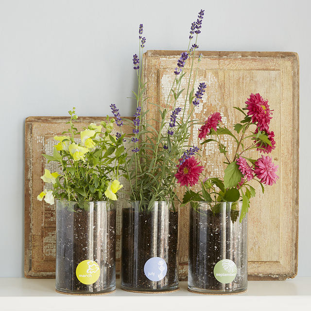Three flowers growing in their own glass bottle