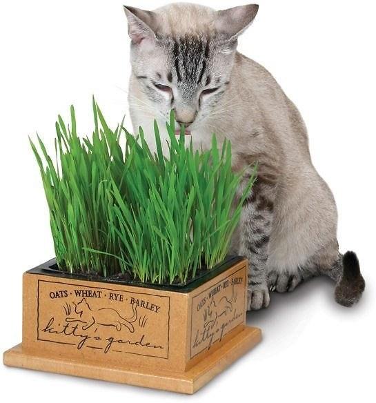 Cat biting the grass