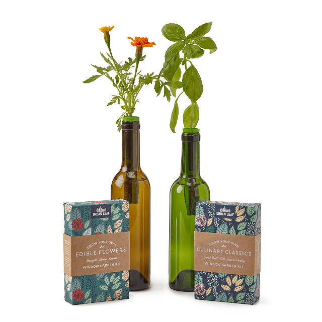 The kits and herbs growing in empty wine bottles