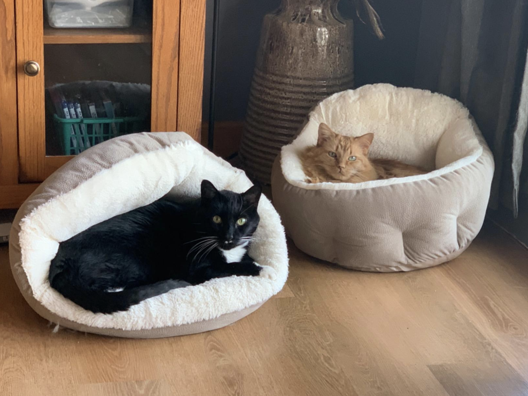 Two cats sitting in two separate cuddler beds. One black cat is sitting on the edge of its bed while the other is sitting completely inside it.