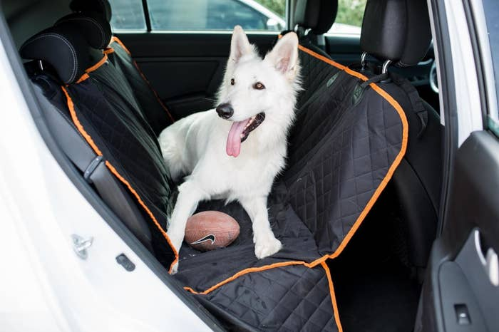 A really attentive and happy white dog with a lolling tongue sitting atop a backseat cover in a car