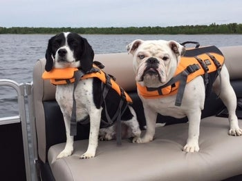 Two dogs, one that looks like a spaniel and one that looks like a bulldog, sitting on a boat seat wearing their orange life vests