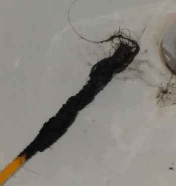 A FlexiSnake covered in hair after pulling it out from the drain