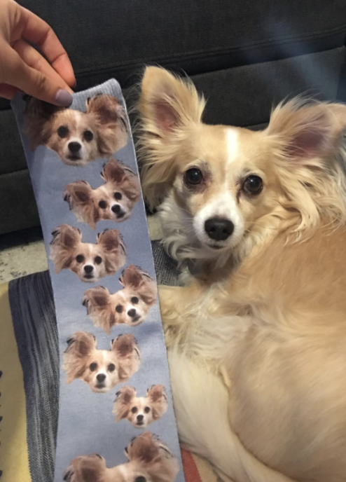 A grey sock with a bunch of dog faces is held up next to the dog whose face is on the socks