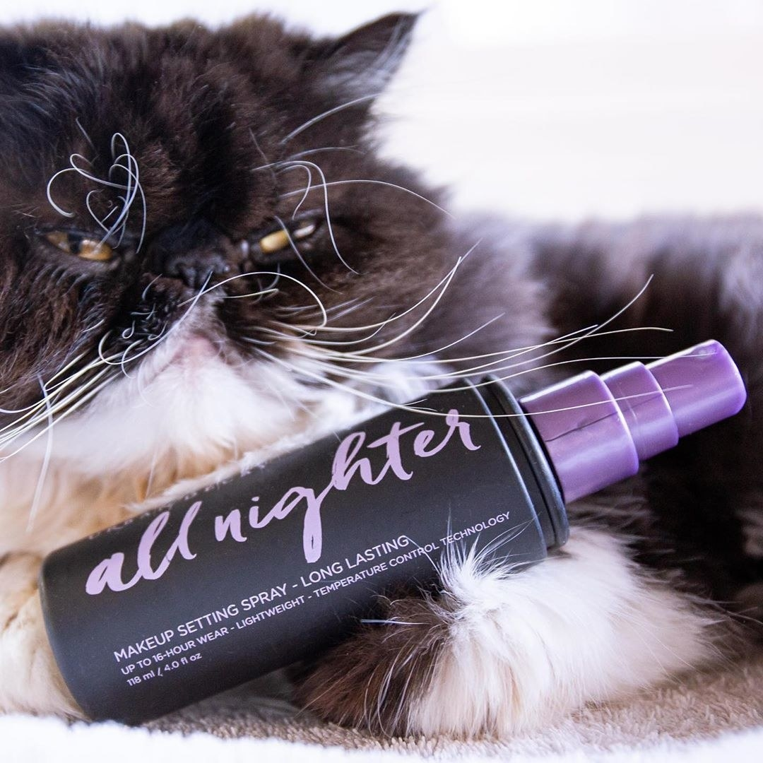 A bottle of the all nighter setting spray with a cat