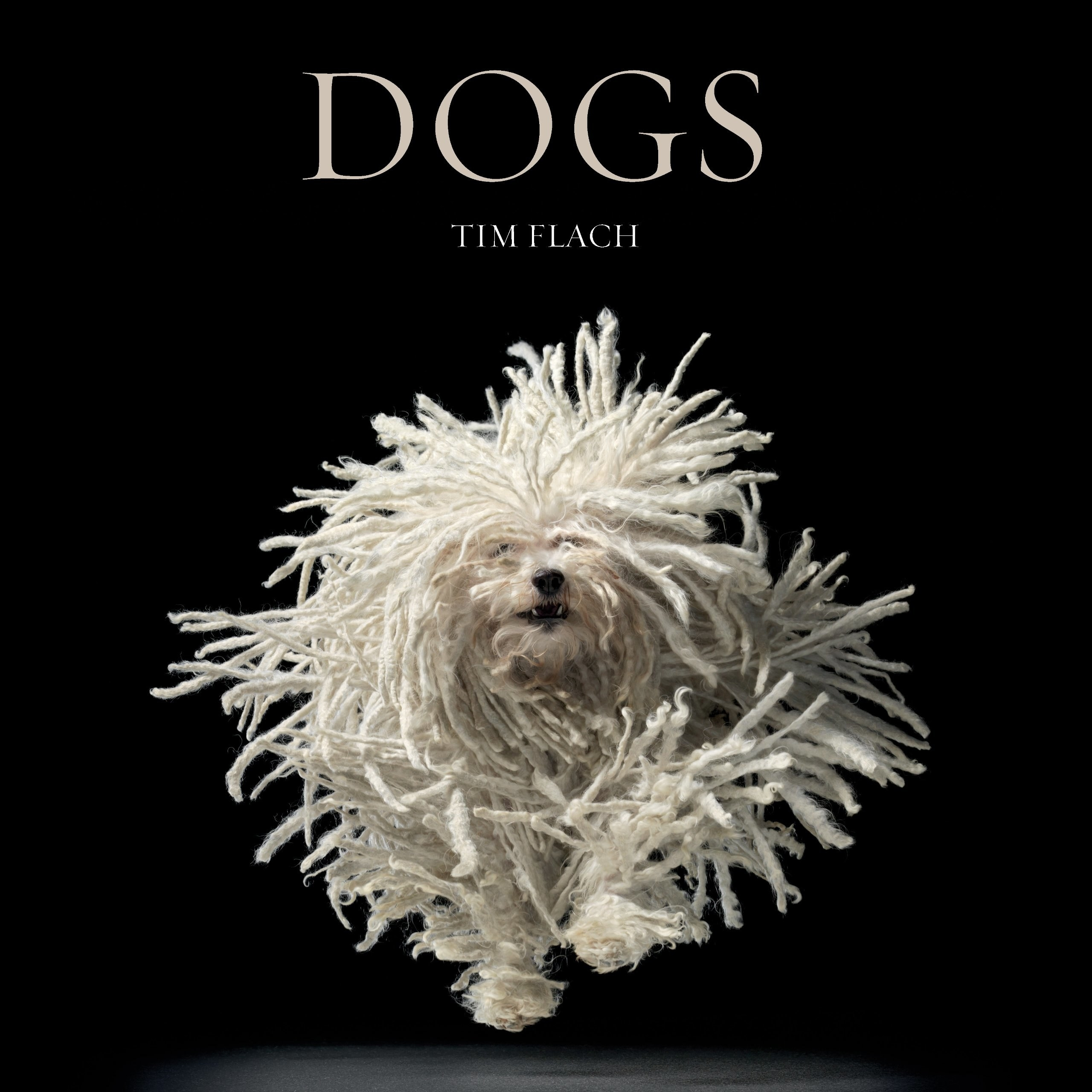 "a book cover for the book ""Dogs"" that is all black except for an excited, running dog that looks similar to a mop"
