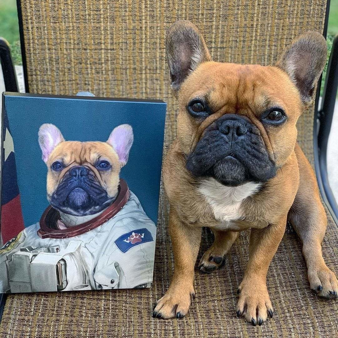 a portrait of a french bulldog looking very regal in a space suit placed to the left of the french bulldog in real life
