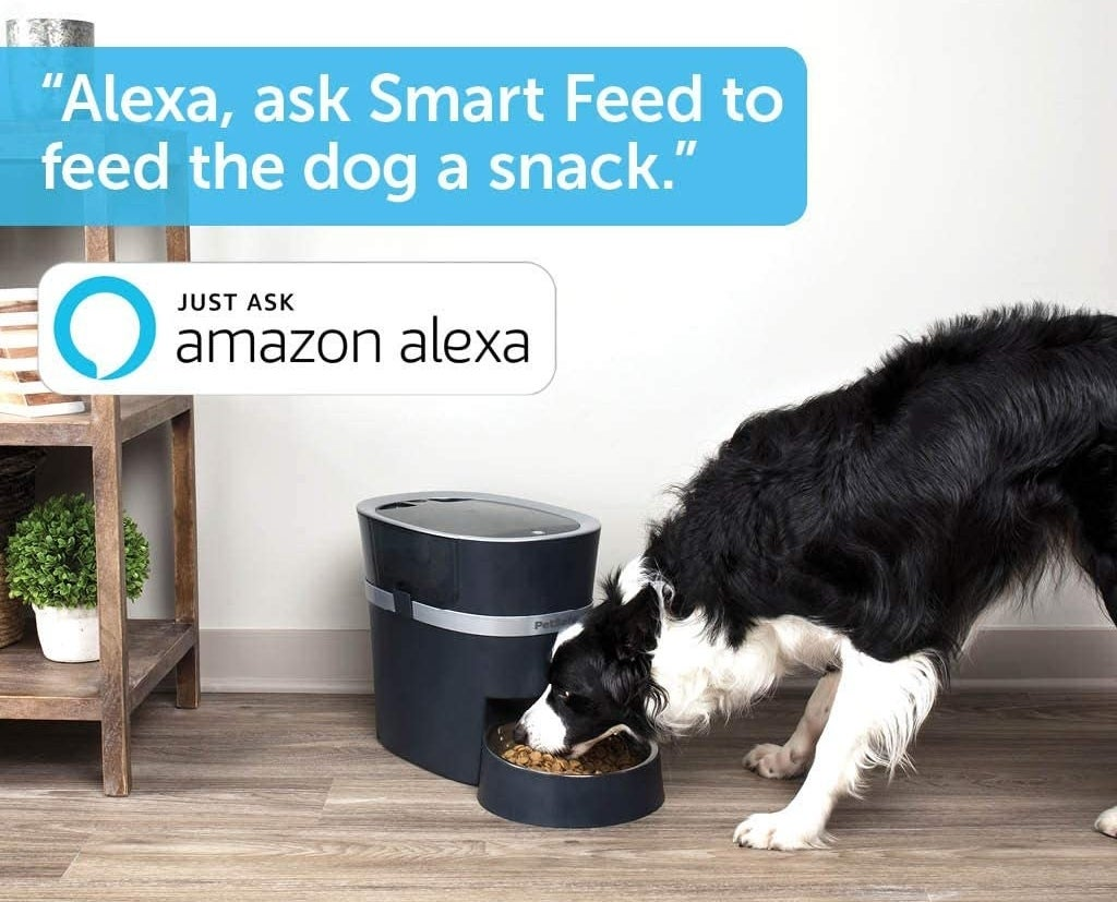 A cute dog eating dry food out of the automatic feeder