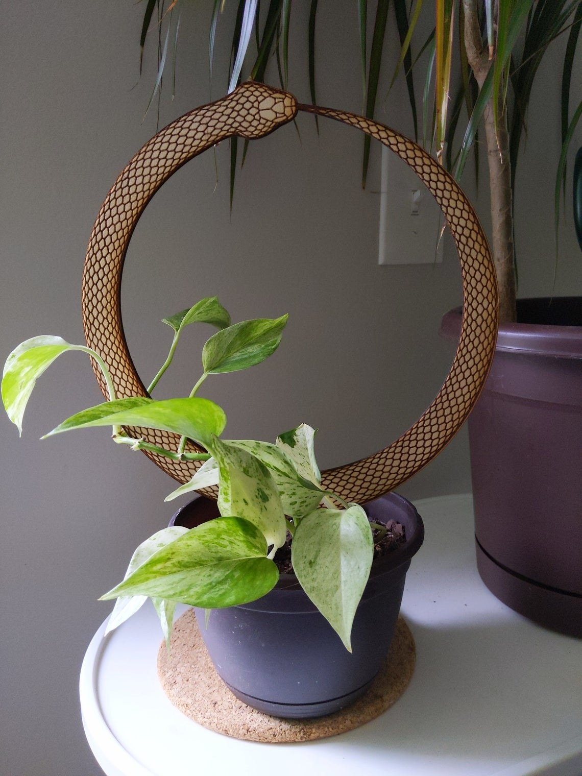 wooden snake eating tail staked in houseplant