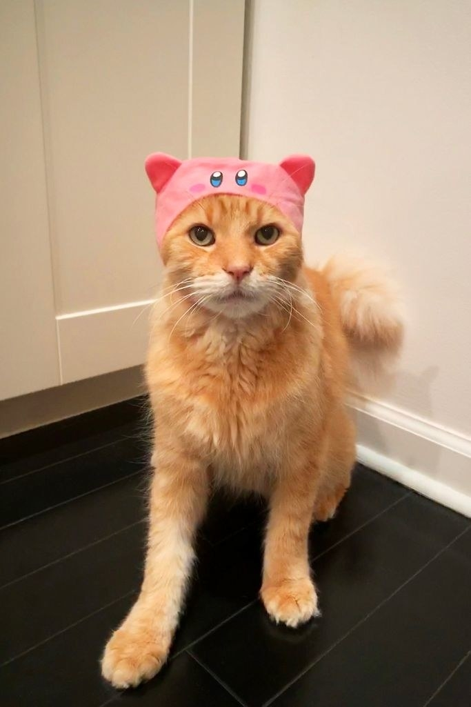 a cat wear a cap shaped like kirby so it appears like the pink character is eating the cat's head