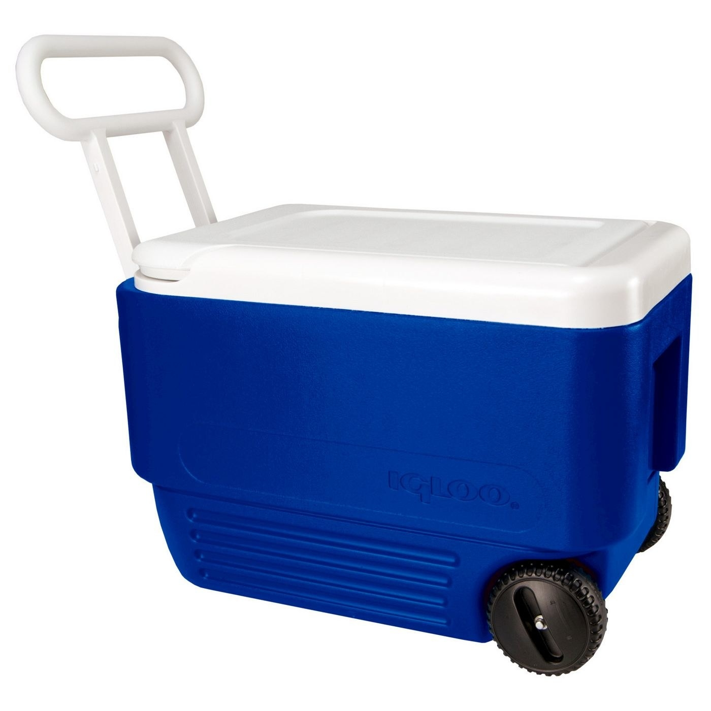 Igloo Wheelie cooler in blue and white