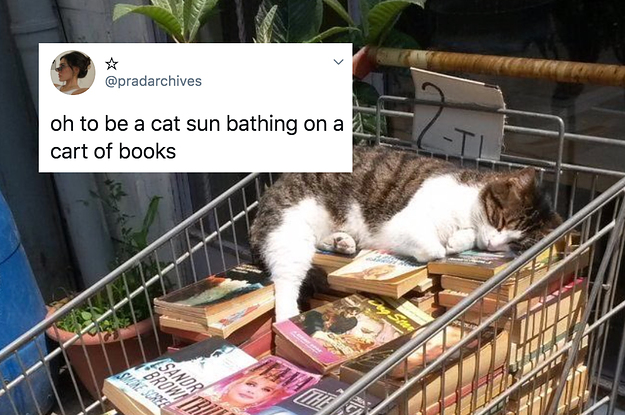 21 Wholesome Tweets About Animals That Prove How Ridiculous They Are