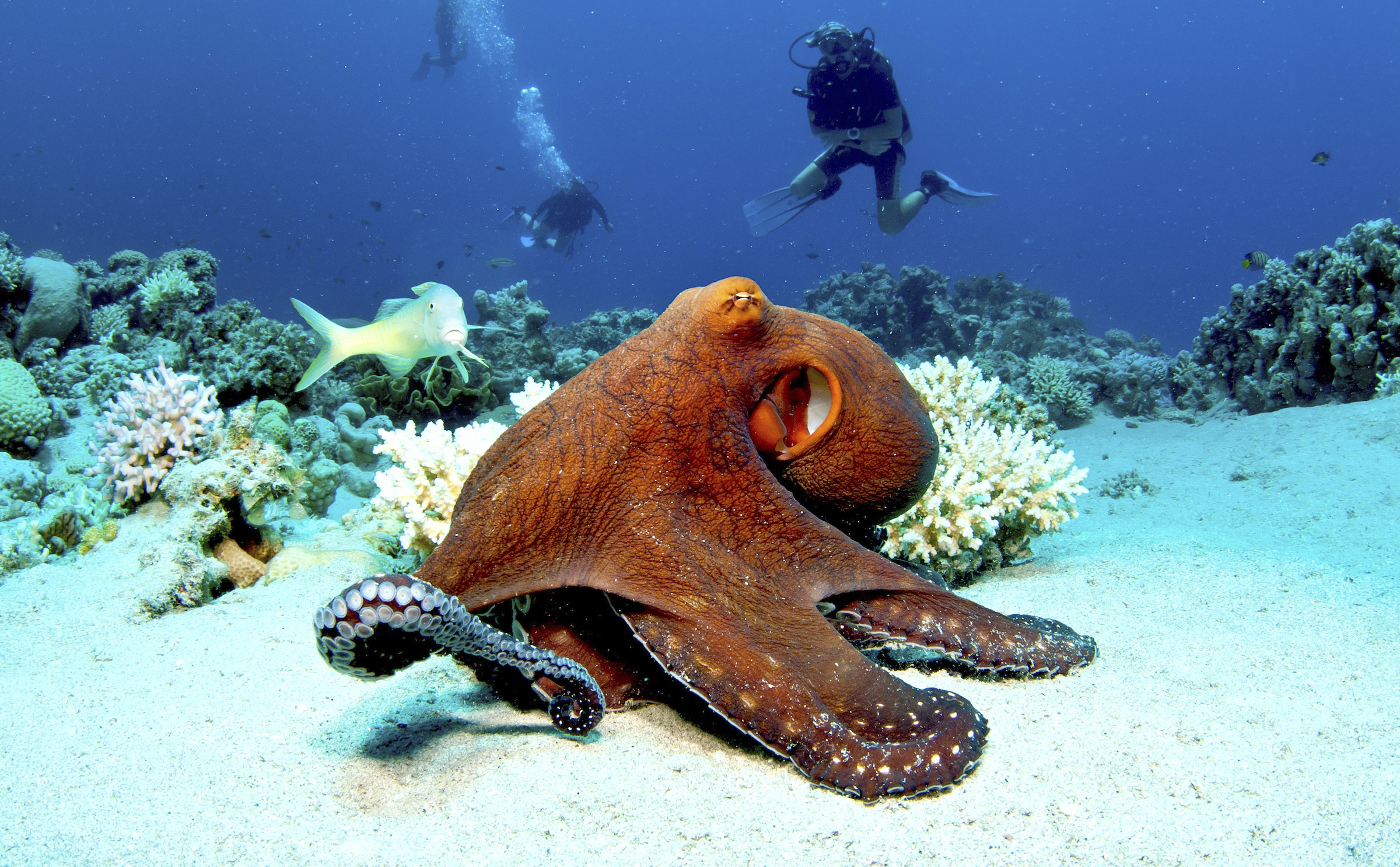 An octopus on the sea floor.
