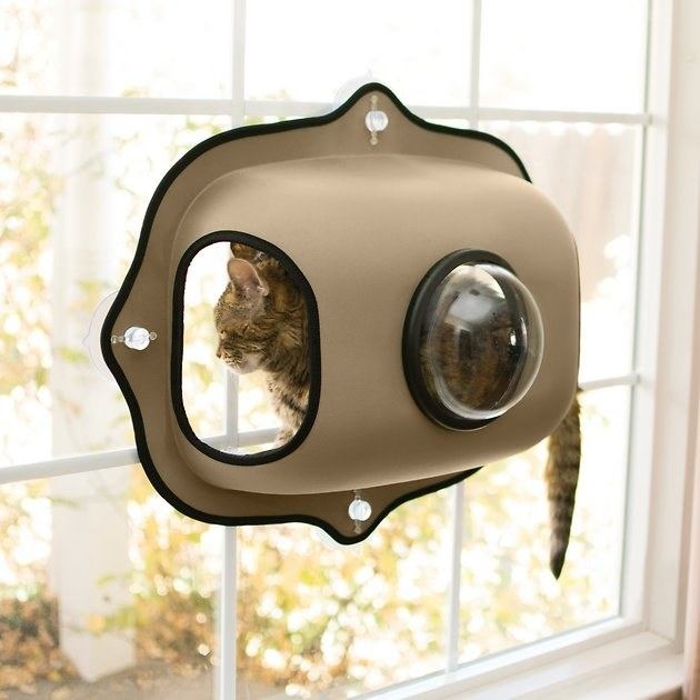 A cat inside the perch, suction cupped to a window. The perch has a plastic bubble window on the back.