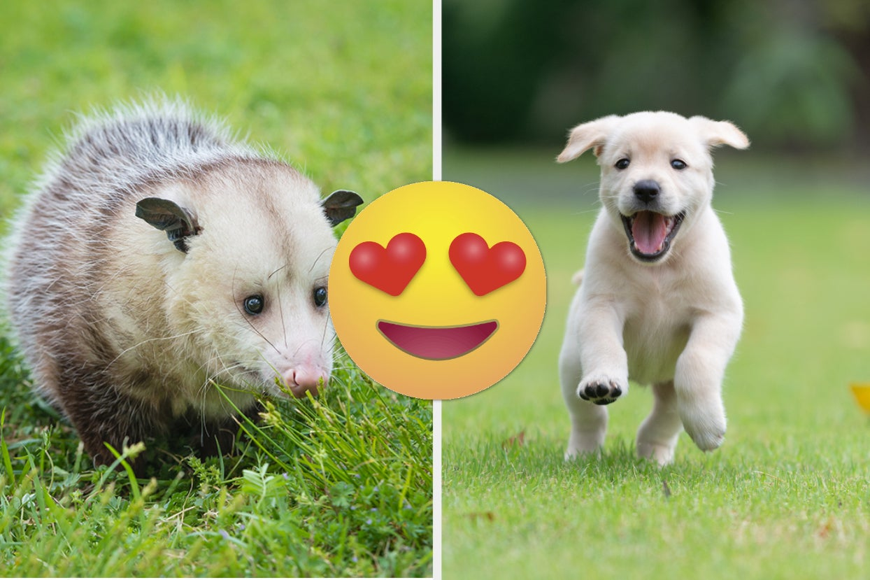 15 Super Cute Animal Tweets That Melted My Heart