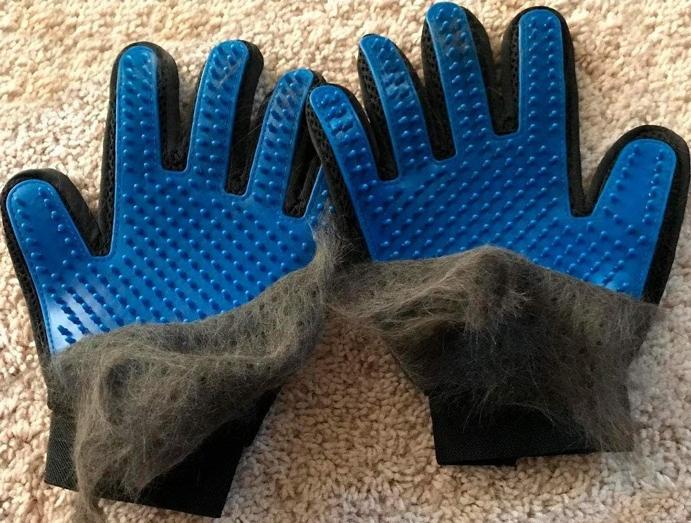 Cat hair covering half of the palms on a pair of pet-brushing gloves