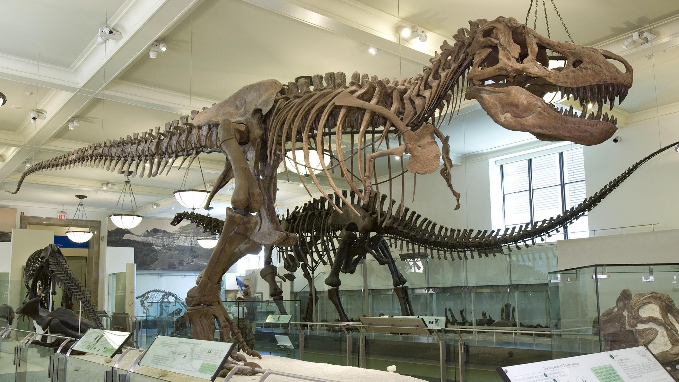 dinosaur exhibit at American Museum of Natural History