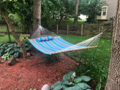 the hammock between two trees