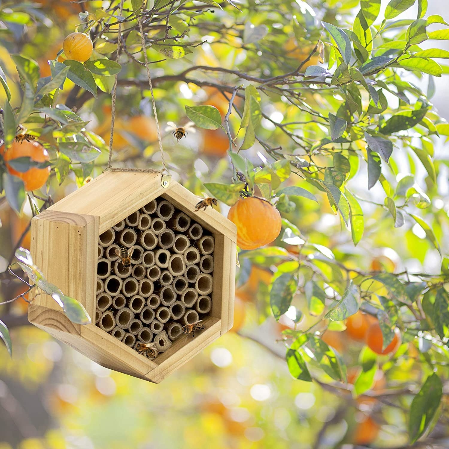 The house, which is filled with pre-made tubes in which the bees can nest