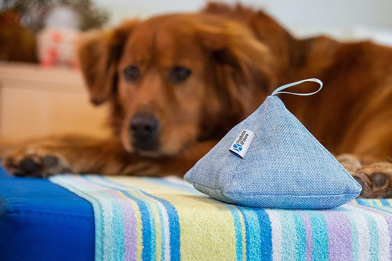 A small pyramid-shaped deodorizing bag perched on a couch in front of a dog