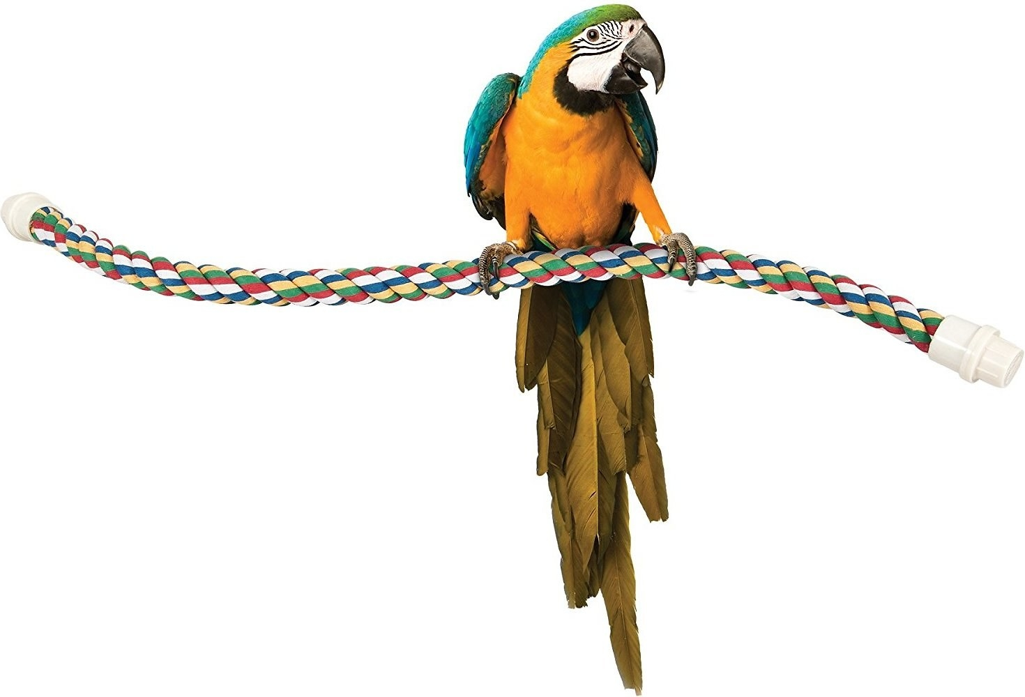 a parrot perching on the rope