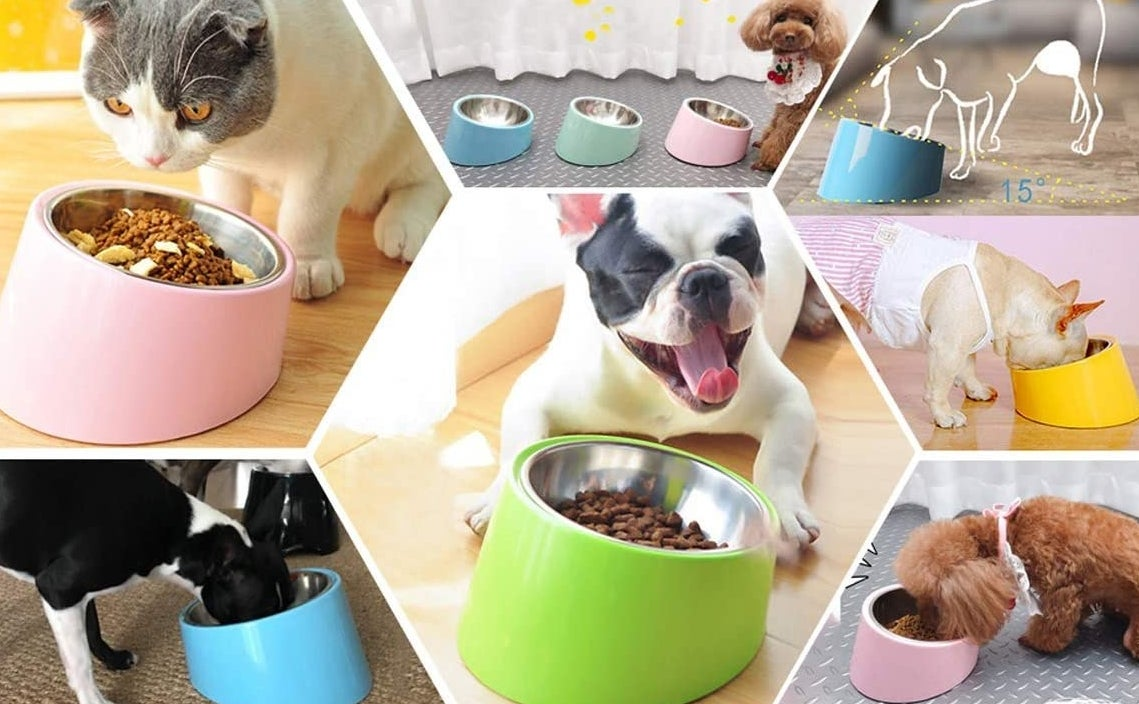 Several dogs and cats eating out of slanted bowls