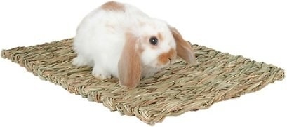 a bunny on the mat