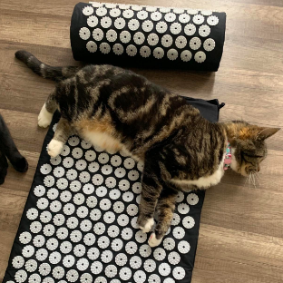 A cat laying on top of the mat and pillow that are placed on the floor