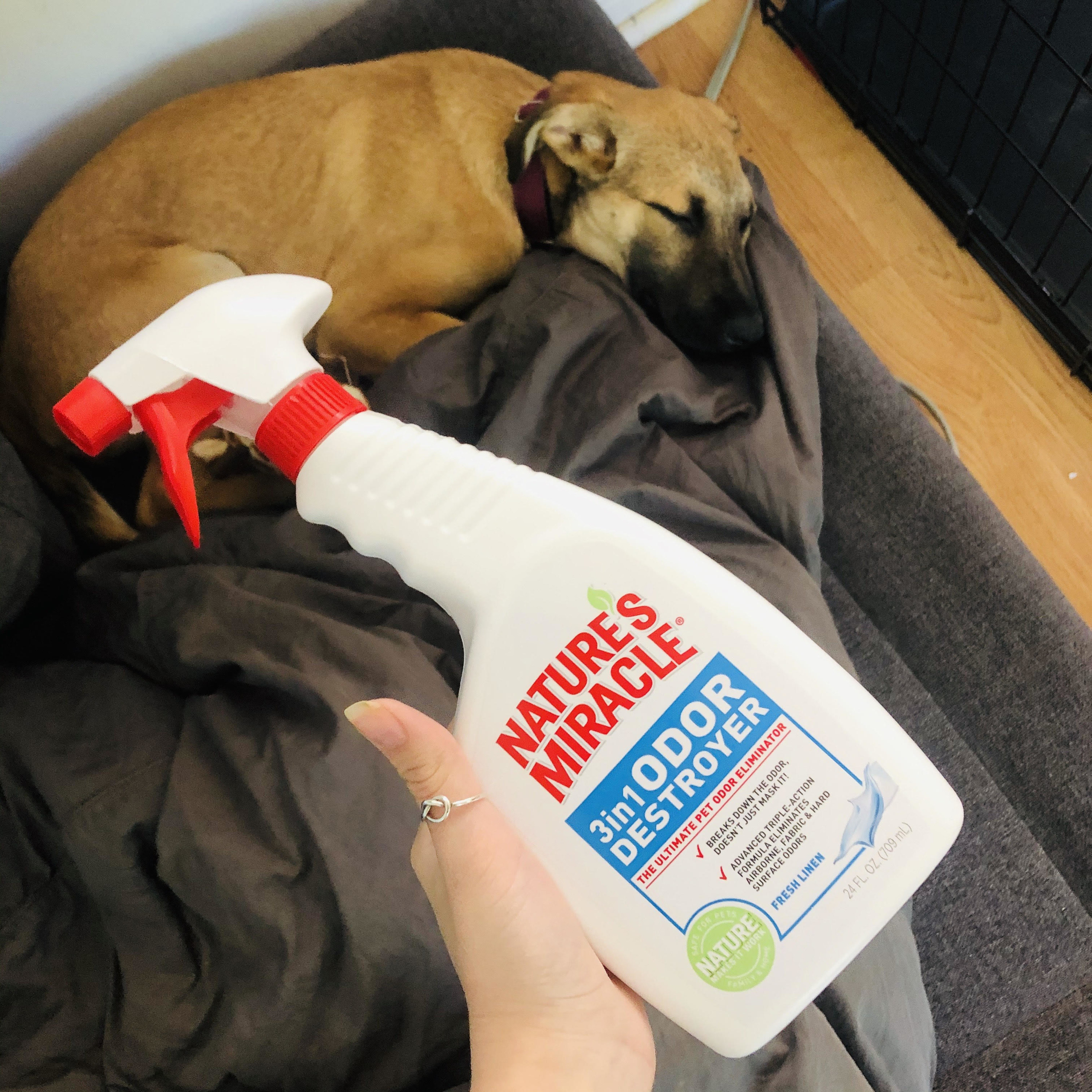 A bottle of odor destroyer being held up in front of a sleeping puppy