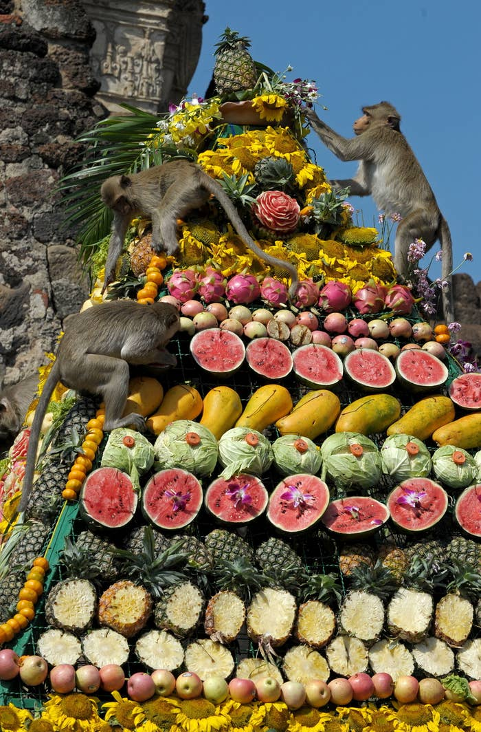 Three monkeys climbing a giant pyramid made of colorful fruits and vegetables