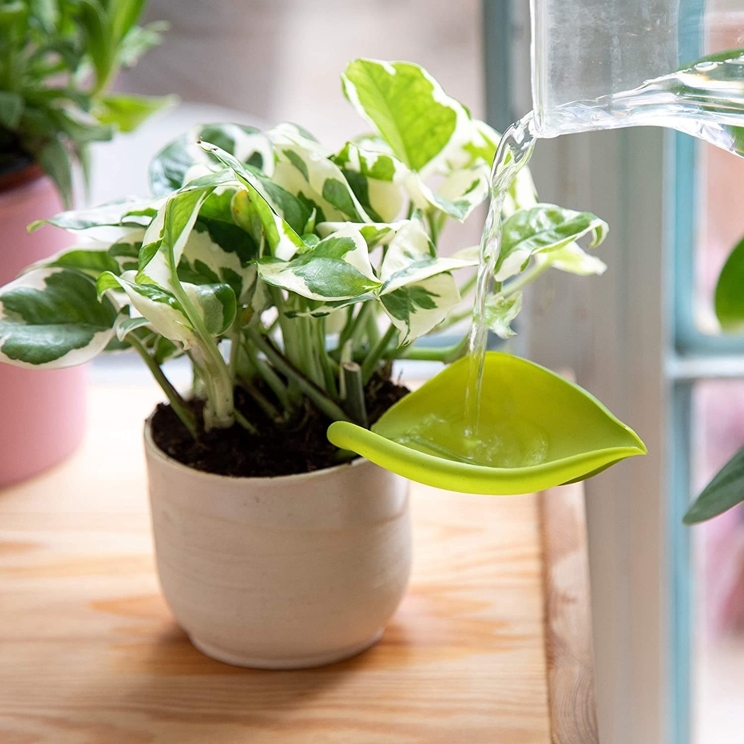 a leaf-shaped funnel that connects to side of pot