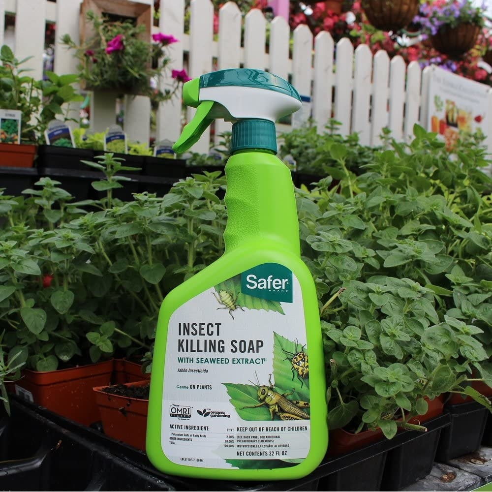 green spray bottle in front of plants