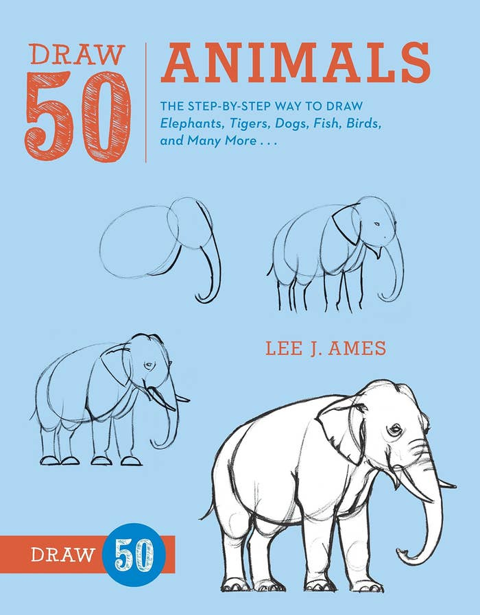 Cover of the animal drawings book