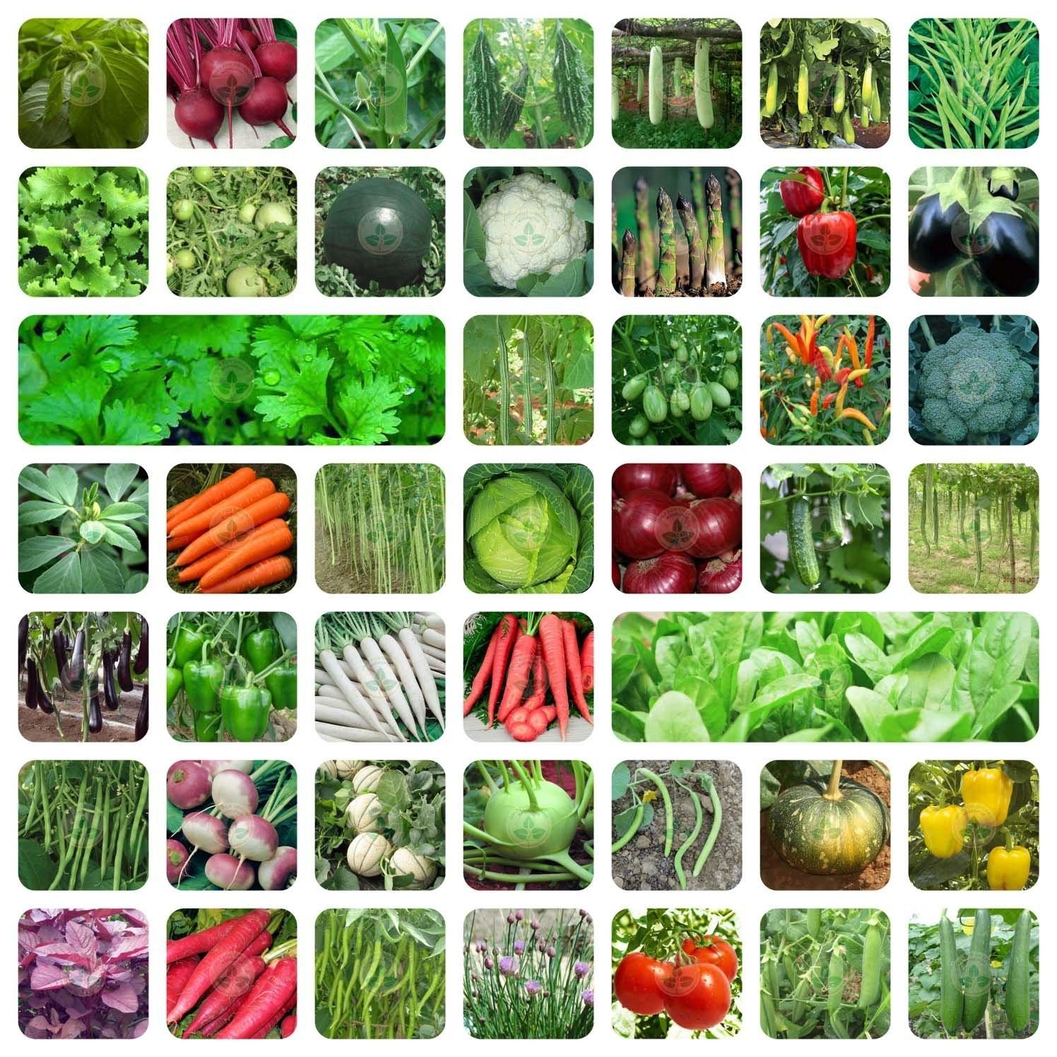 Vegetable growing kit