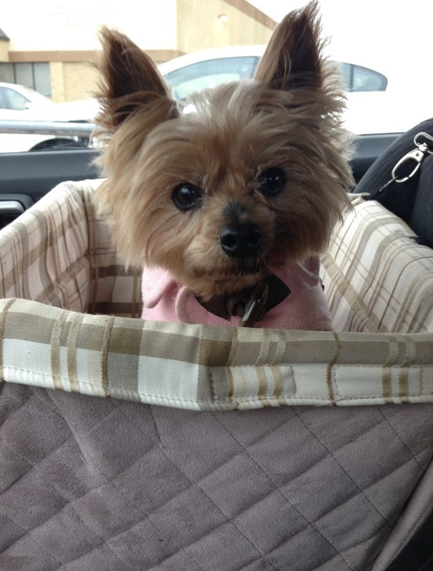 Small dog in the carrier