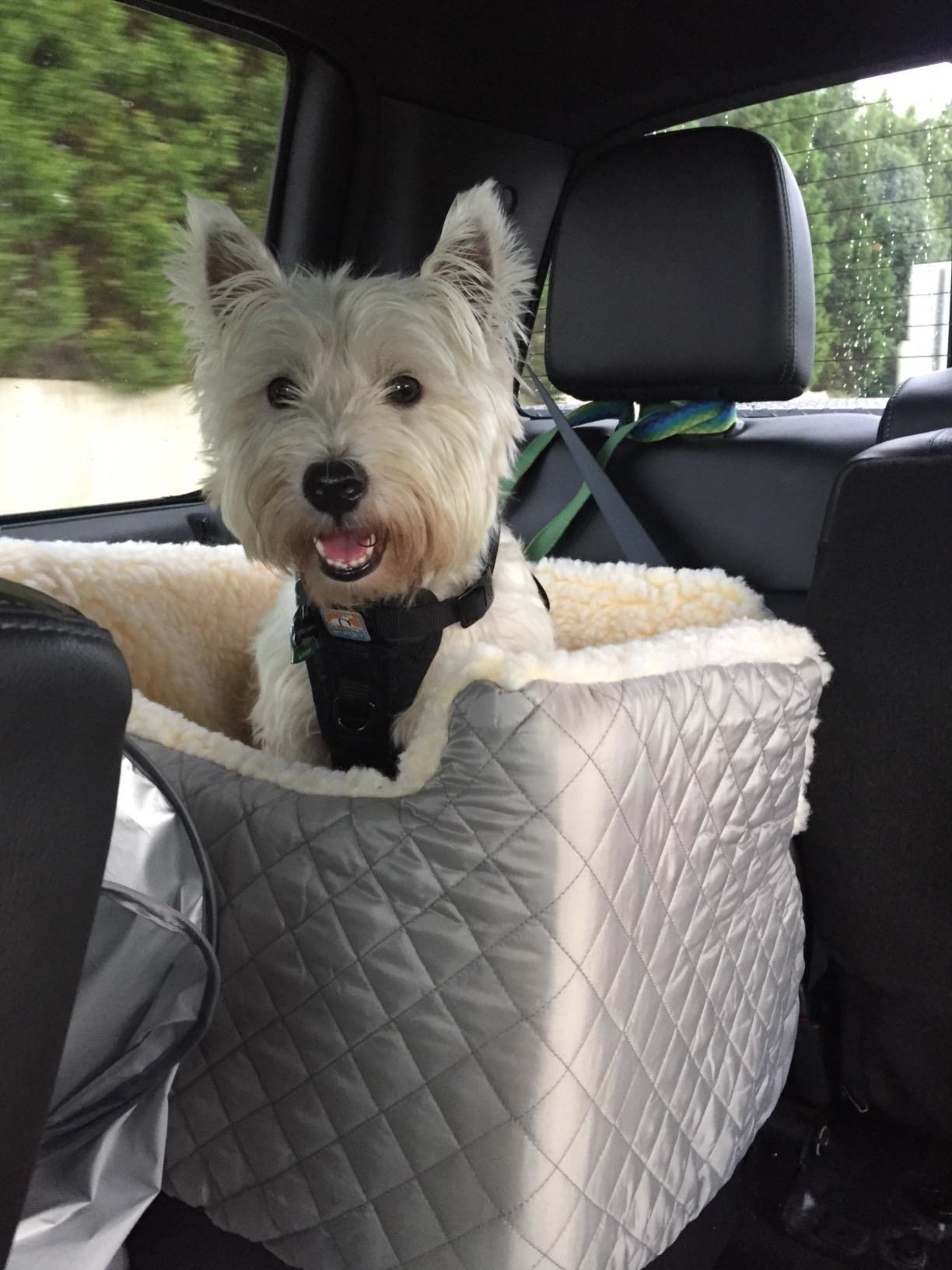 Reviewer photo of a small dog in the carrier
